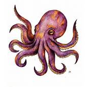 Octopus Tattoos Designs Ideas And Meaning  For You