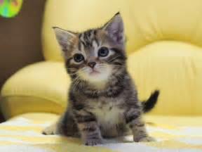 子猫:... 子猫画像!! - NAVER まとめ