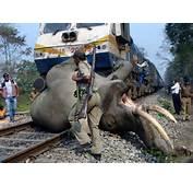 当地时间3月5日,印度孟加拉邦布克萨老虎保护区的