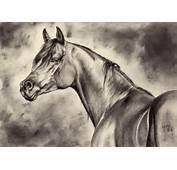 Arabian Horse Head Wallpaper Iii By Maniaadun