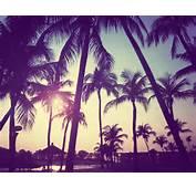Palm Trees &amp Rollerblades