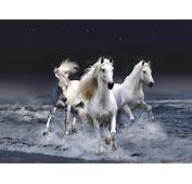 White Horse ♡  Horses Photo 35203667 Fanpop