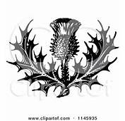 Thistle Drawing Tattoo And White Flower