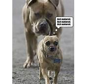 Funny Animal Overload – 55 Pics
