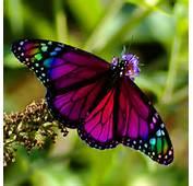 Rainbow Butterfly  Butterflies Photo