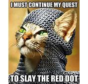 Little Kitty's Quest In Life