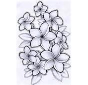 Plumeria Drawing By Timchris On DeviantArt
