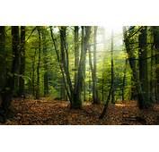 20 Charming Forest Photos  Pelfind