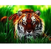Tag Tiger 3D Wallpapers Images Photos Pictures And Backgrounds For