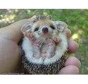 The Cutest Baby Animals In World  Cool Stuff Directory