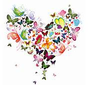 Heart Of Butterfly  Free Vector Graphic Download