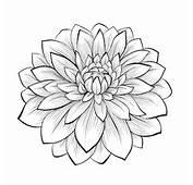 Il Fiore Di Loto Un Disegno Molto Femminile Per Tattoo Floreali