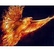 Phoenix 600x450 Top 10 Mythical Creatures