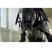 For A Nightmare The New Alien/Predator Hybrid Film Guardian