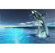 Kumpulan Ikan 2000 Killer Whales Wallpapers