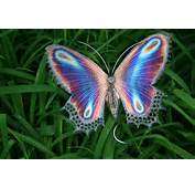 About And Purple Will Draw In Butterflies Fluttering Seemingly Without