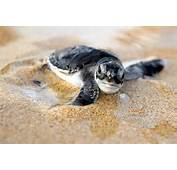 Baby Turtle Foods  Home Pet Care