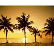 Sunset Image Of Palm Tree