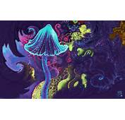 Magic Mushroom Wallpapers And Images  Pictures Photos