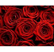 The Red Rose Not Only Carries More Meaning Than Many Other Color Roses