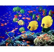 Sea Life Marine