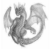 1000  Images About DRAGON Drawing On Pinterest Dragon Drawings