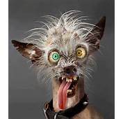 Very Ugly Dog  Jokes Memes &amp Pictures