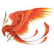 Dragon Phoenix Tattoo Tattoos Art General