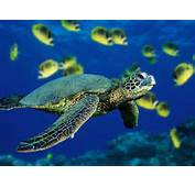 Wallpaper Collection Turtle