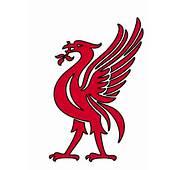 Liver BirdYNWA  Liverpool Fc Pinterest