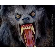 Werewolf Drawings  Werewolves Photo 7325044 Fanpop