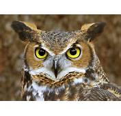 Cute Names For Owls  Myideasbedroomcom