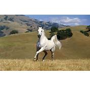 Beautiful Horse  Horses Wallpaper 22410522 Fanpop