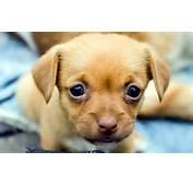 Cute Puppy Wallpapers And Images  Pictures Photos