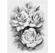 Rose Drawing 14  8614 The Wondrous Pics