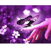 Beautiful Butterflies  Wallpaper 9481170 Fanpop