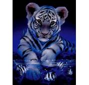 White Baby Tiger Lyt 1 Graphic And Picture  Imagesize 149 Kilobyte