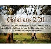 Bible Verses On Love Galatians 220 21 Trees HD Wallpaper