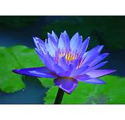 Lotus Water To Better Serve The Growth In Our Traffic We Have Moved