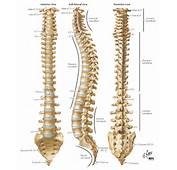 Performance U Fitness Continuing Education  An Inside Look At Spinal