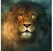 Beautiful Animals Safaris Amazing Lions Big Cats Africas Dangerous
