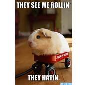 Animal Memes Omg Cute Things 082712 04