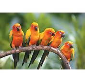 50 Beautiful Photos Of Birds