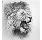 Roaring Lion Pencil Drawing On Coquille Paper Early 90s This