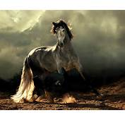 Majestic Beauty  Arabian And Andalusian Horses 36 Pics Triggerpit