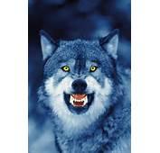 Go I Am Sending You Out Like Lambs Amongwolves Luke 103 NIV
