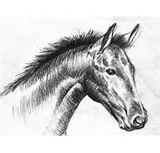 Animals Wallpapers Black And White Horse Drawings