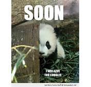 Fluffy Thing Fridays – Pandas  That Ash Girl