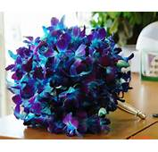 Blue Orchids And White Roses Bridal Bouquet