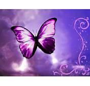 Wallpapers  HD Desktop Free Online Butterfly